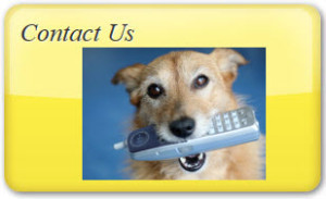 Dog Contact us
