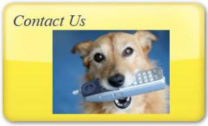 Dog Contact us