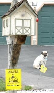 Pet Fence Training